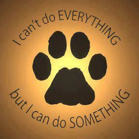 animal-shelter-volunteer-quotes-2rqf8qsz